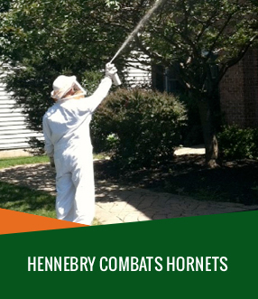 home-slide_hornet