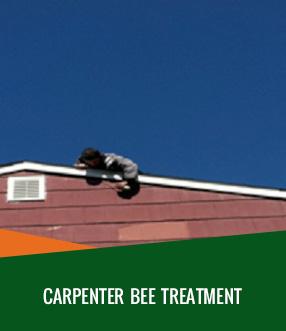 Carpenter-Bee-Treatment